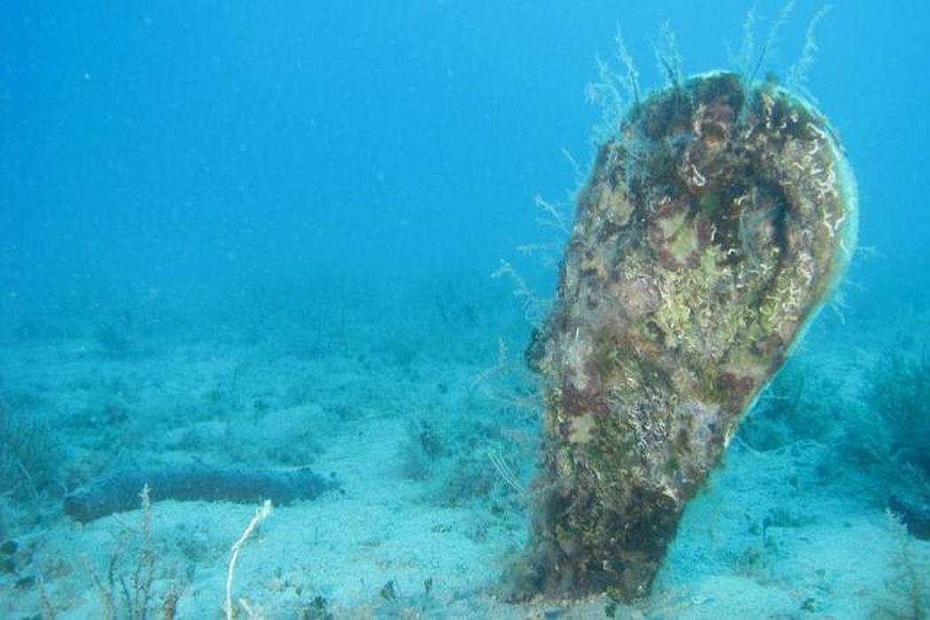 """""""JESTE LI IH VIDJELI?"""" Pronađena živa periska u moru kod Privlake, ronioci će ju ograditi kavezom"""